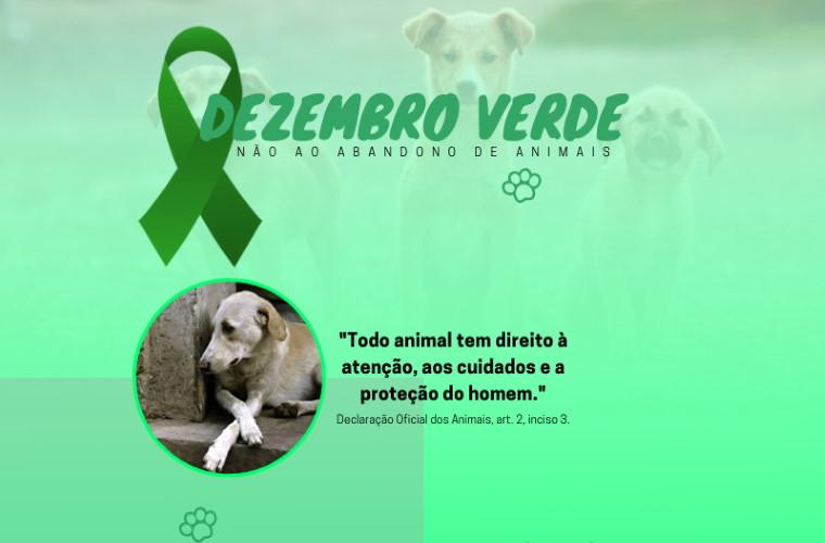 Dezembro verde, mês de conscientização contra o abandono de animais