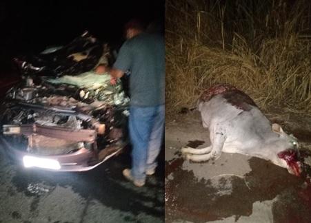 Animal na pista, sentido Jequitibá, provoca acidente na MG-238