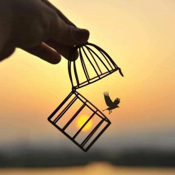 Pássaros livres